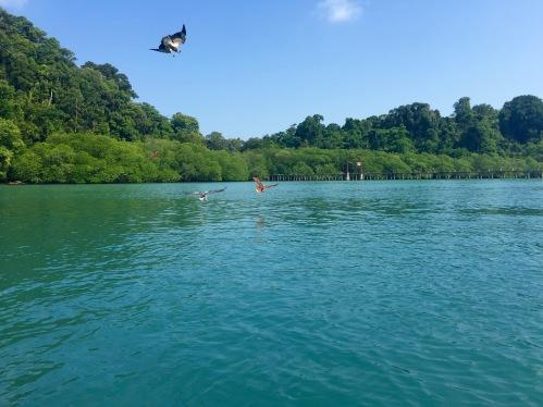 Pulau Singa Besar's eagles