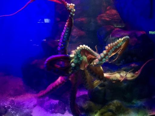 Mrs. Octopus