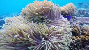 Lots of Nemo's!