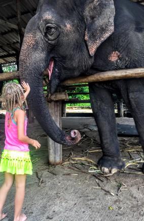 Elephant from Thom's elephant camp