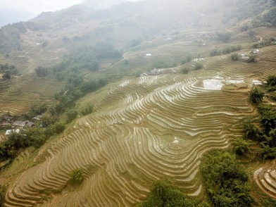 Sapa Rice fields in Winter